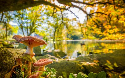 Security tips to look for mushrooms